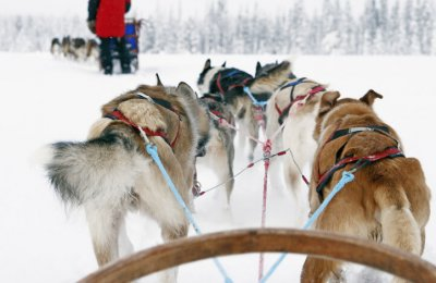 Åk hundspann i vackra vinterlandskap - Vuxen
