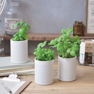 Can + Plant Odlingskit